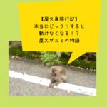 【屋久島旅行記】本当にビックリすると動けなくなる!?屋久ザルとの物語
