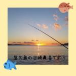 屋久島の谷崎鼻港で釣り